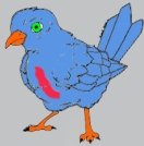 red bellyed blue duck